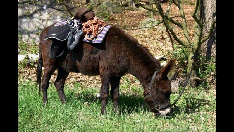"""Emma ist fürs """"Donkey Detox"""" zuständig"""